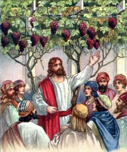43015005 C17 - John 15 5 - I am the vine_ ye are the branches